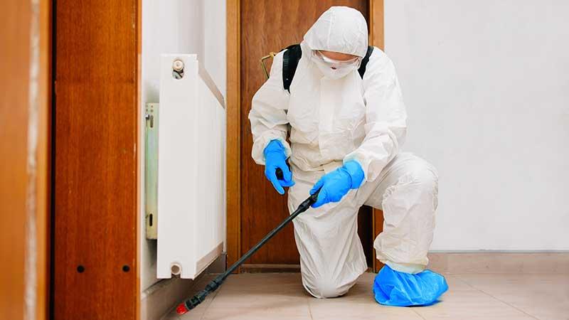 Derattizzazione, disinfestazione, controllo insetti molesti